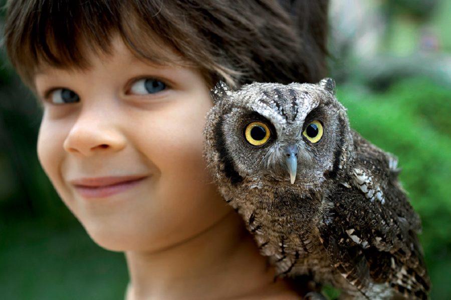 Конкурс на лучшие детские рисунки и поделки с изображением совы или филина