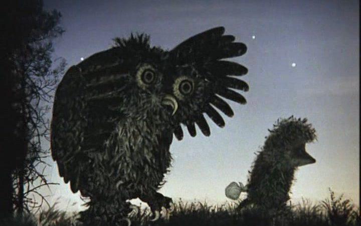 Мифы о совах: 6 громких разоблачений