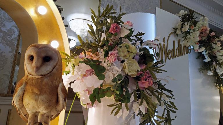 Нестандартная свадьба «под ключ» — с совами и другими возможностями ГРЦ «ПАРАDOX»