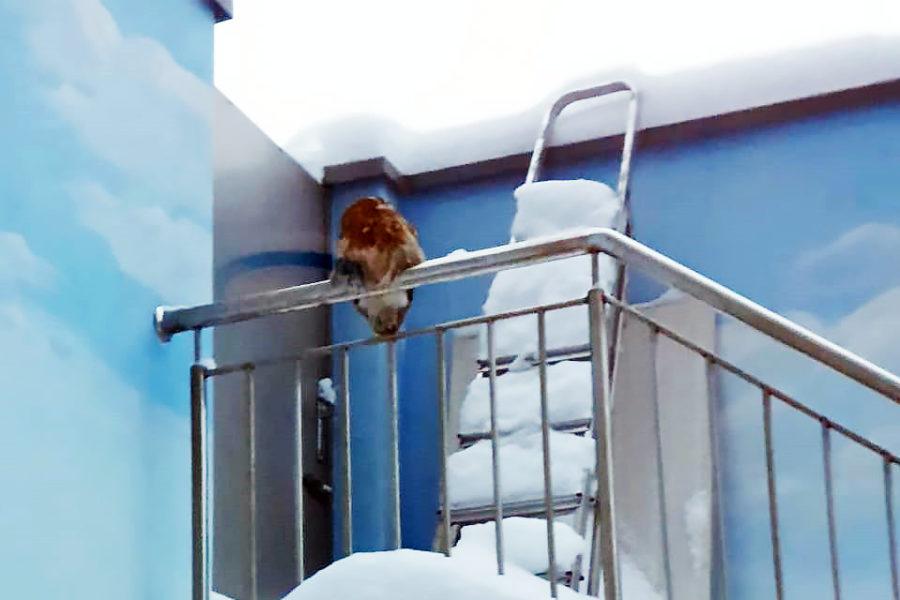 И снова сова прилетела!