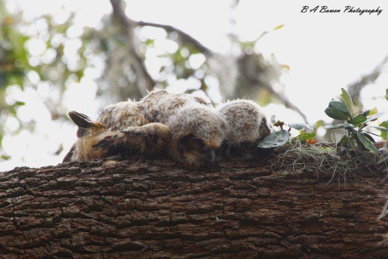 Как спят совята: реальность или фотошоп?!